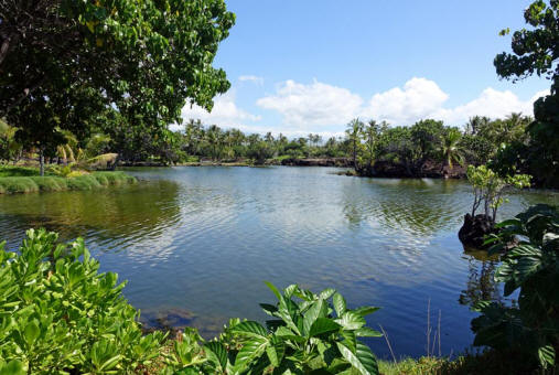 Fishpond am Hualalai Resort